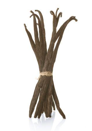 flor de vainilla: Vainilla aislado en blanco