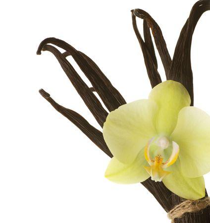 flor de vainilla: Frontera de vainilla Foto de archivo