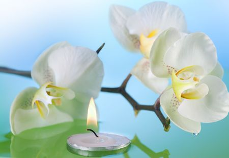 Orchid and floating candle in water photo