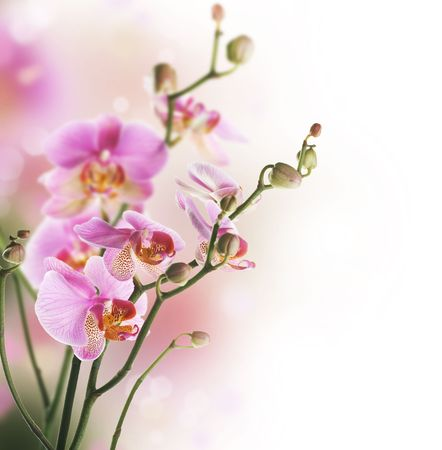 Beautiful Orchid Border isolated on White.Tiefensch�rfe
