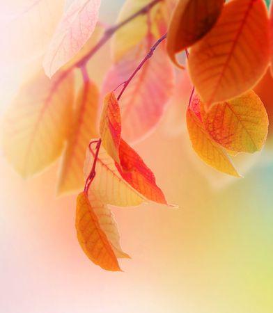 wind down: Autumn