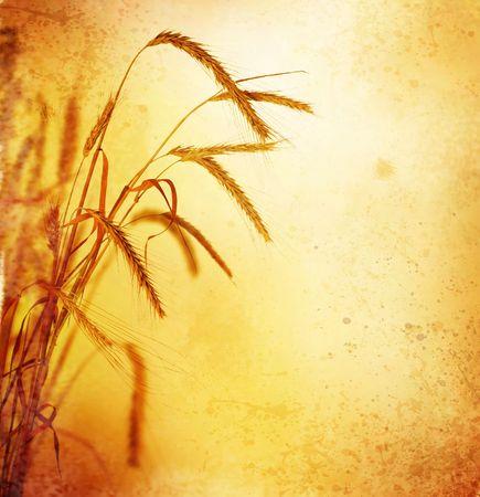 Wheat.Retro Styled photo