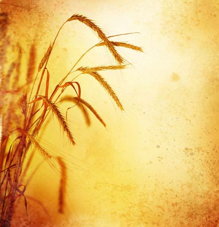 Wheat.Retro Styled Stock Photo - 6463165