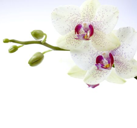 orchid branch: Beautiful Orchid Stock Photo