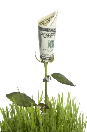 playing with money: Financial growth. Conceptual image.