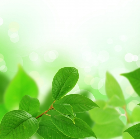 Fr�hling Leaves-Border