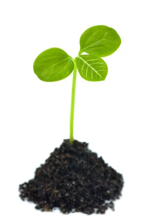 growing plant: Growing plant in soil. New life concept
