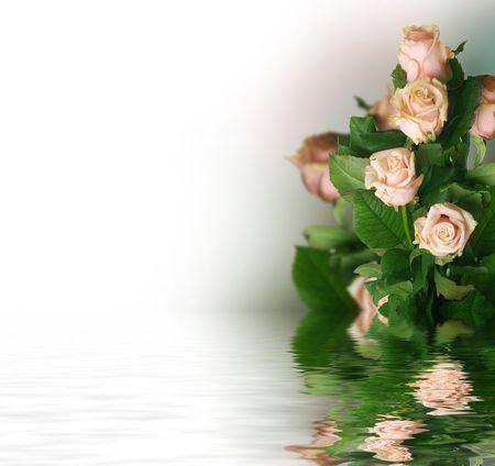 focus shot: Beautiful Roses