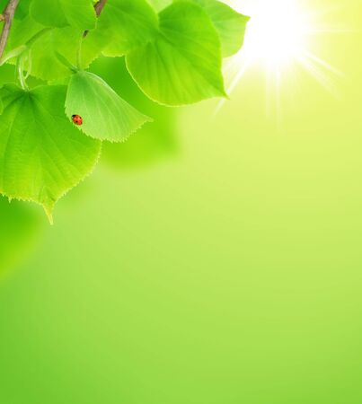 Fresh Spring Leaves background  photo