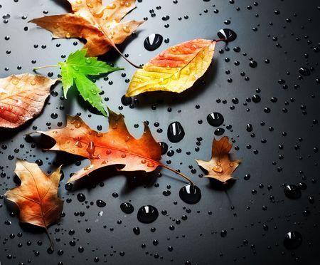 Autumn over black Stock Photo - 6623454