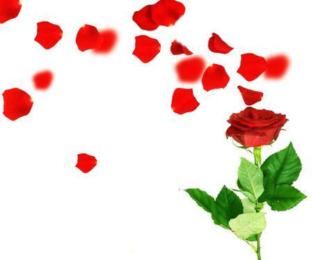 tige: Red Rose et Flying pétales  Banque d'images