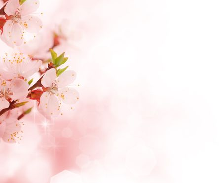 march: Spring blossom