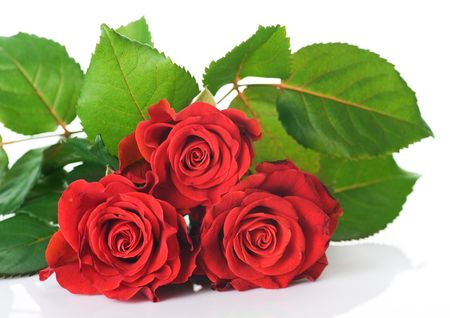 passions: Beautiful red Roses over white