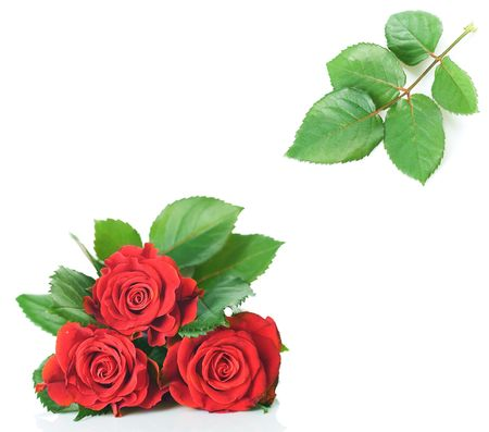 passions:  Beautiful red Roses over white Stock Photo