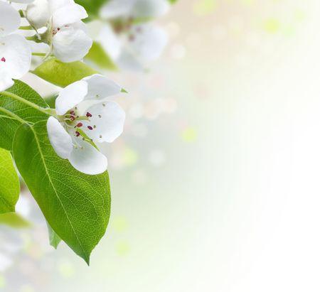 stamens: Spring Blossom border