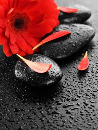 petals: Zen Spa Wet Stones and red flower Stock Photo