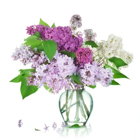 glass vase: Beautiful Bunch of Lilac in the Vase