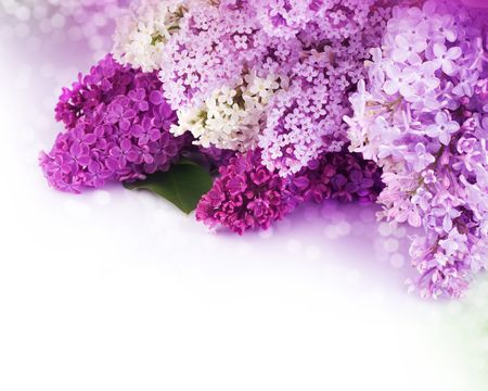 detail of bunch: Beautiful Lilac Flowers Border