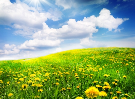 champ de fleurs: Paysage de printemps Banque d'images