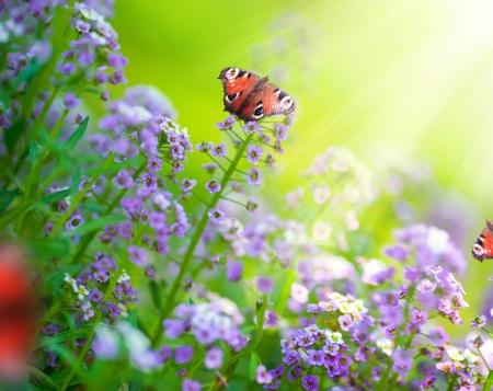 petites fleurs: Papillons sur un fleurs