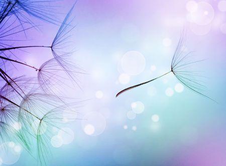 viento soplando: Resumen de la hermosa volando semillas de diente de Le�n  Foto de archivo