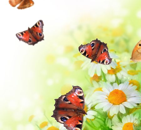 white butterfly: Butterflies on a flowers Stock Photo