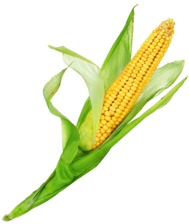 corn kernel: Sweet Corn isolated on white