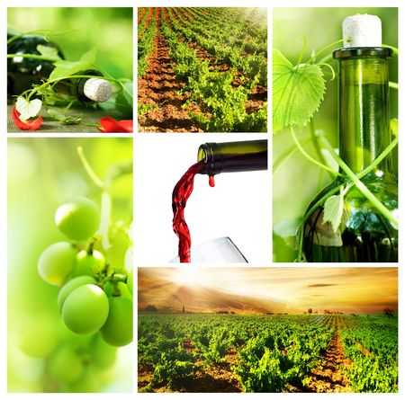Wine Collage Stock Photo - 7660468
