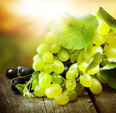 Grapes.Grapevine over vineyard background 스톡 콘텐츠