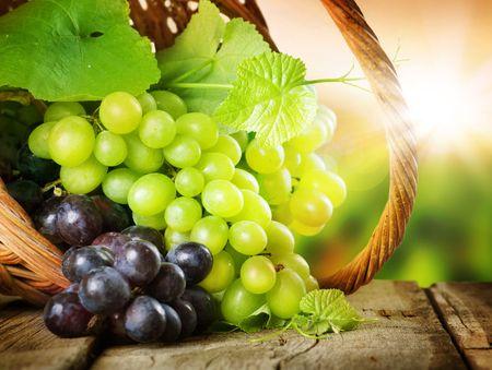 fruit basket: Grape.Grapevine sobre fondo de vi�edo  Foto de archivo