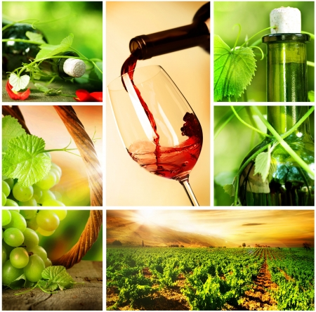 grape field: Wine.Beautiful Grapes Collage  Stock Photo