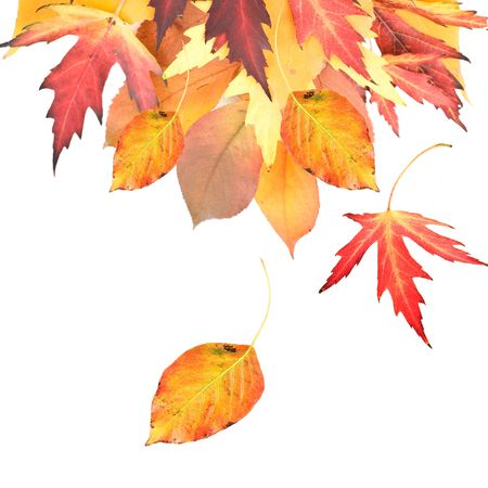 wind down: Autumn Leaves