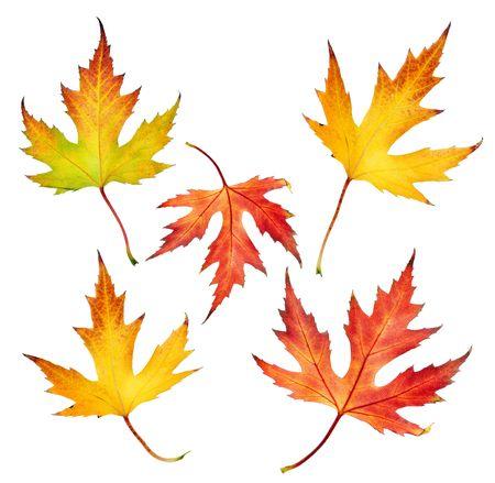 Autumn Leaves set photo