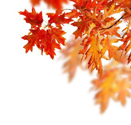 Autumn: Hojas de otoñales  Foto de archivo