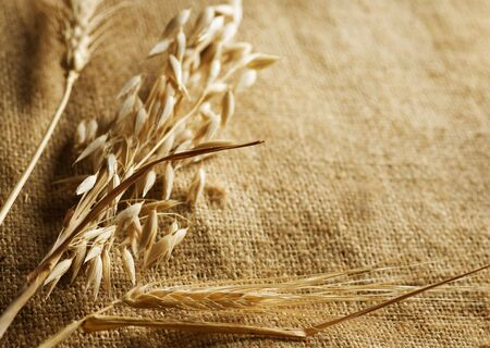 Wheat Ears on Burlap background.Country Style.With copy-space Stock Photo - 7814890