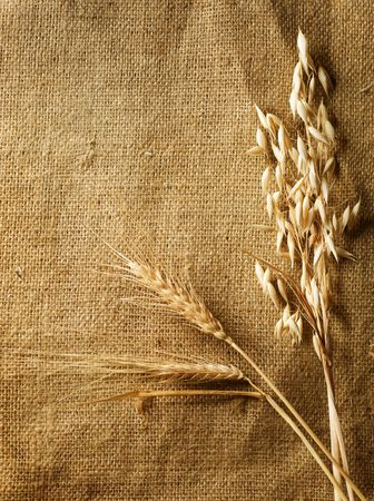 burlap background: Wheat Ears on Burlap background.Country Style.With copy-space