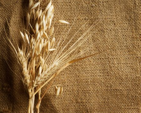 up country:  Wheat Ears on Burlap background.Country Style.With copy-space Stock Photo