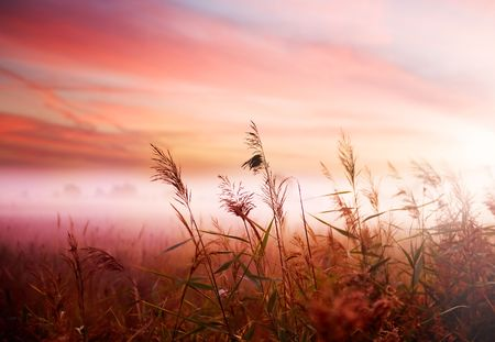 Nebelig Landscape.Early Morning Mist.