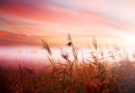 Foggy Landscape.Early Morning Mist. Standard-Bild
