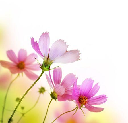 아름 다운 꽃 테두리입니다. 꽃 디자인