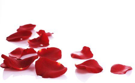 Borde de pétalos de Rosa