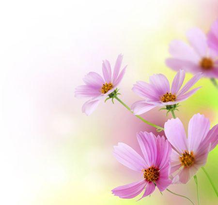 bordure floral: Beau design Floral Border.Flower