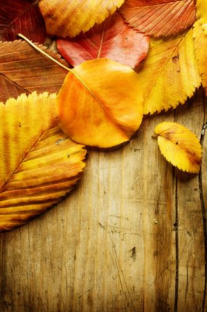 rusted background: Autumn Leaves over wooden background. With copy-space for text