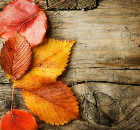 autumn grunge: Autumn Leaves over wooden background.With copy space