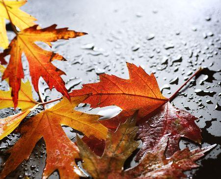 goutte de pluie: Wet automne laisse sur noir