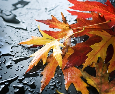 Autumn wet leaves over black  photo
