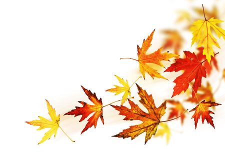 fall leaves: Autumn Leaves
