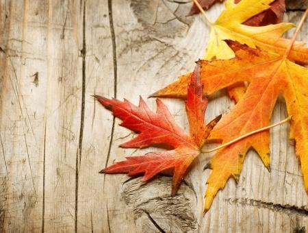bladeren: Autumn Leaves op houten achtergrond Stockfoto