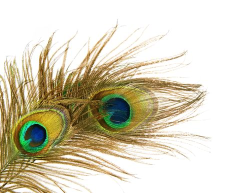 peacock eye: Peacock Feathers over white