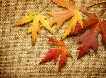 Autumn Leaves over Burlap background photo